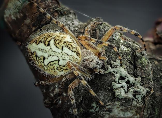 Uma aranha rasteja em um galho
