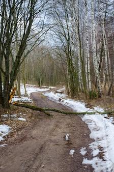 Uma árvore caiu em uma estrada rural