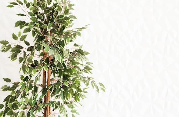 Uma árvore com pequenas folhas verdes contra uma parede branca.