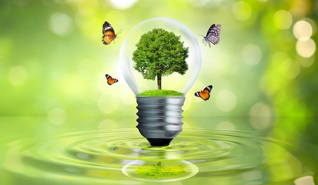 Uma árvore crescendo em uma lâmpada flutuando na água