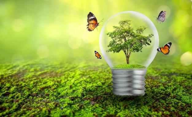 Uma árvore crescendo em uma lâmpada