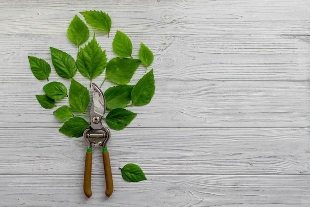 Uma árvore de um podador de jardim e folhas verdes em um fundo de madeira rústico branco. poda de plantas no jardim. jardinagem, conceito criativo. vista do topo.