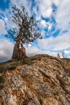 Uma árvore e um toco perto ficam em uma rocha contra o céu. raízes rastejando sobre a rocha. lindo céu com nuvens.