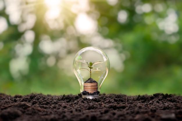 Uma árvore em crescimento em uma moeda dentro de uma lâmpada economizadora de energia
