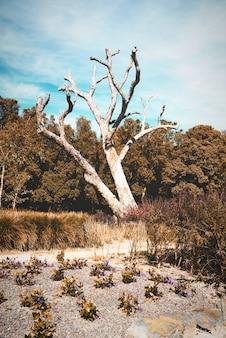 Uma árvore morta no mato.