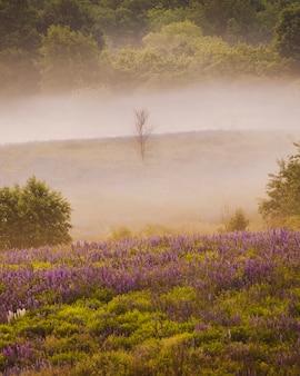 Uma árvore morta solitária em uma colina com tremoços florescendo na névoa da manhã