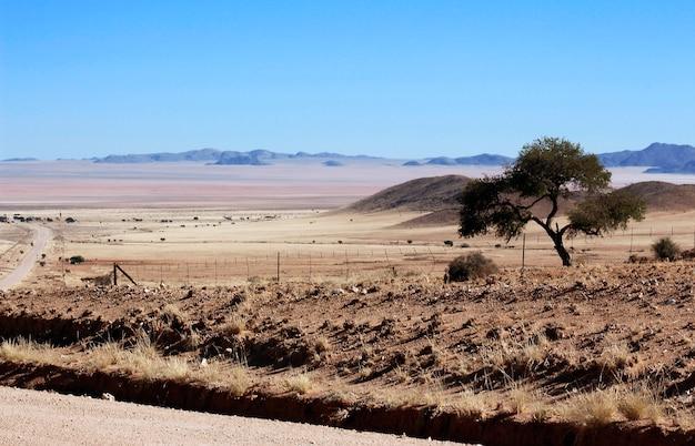 Uma árvore no deserto severo