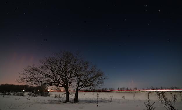 Uma árvore perto da estrada do céu estrelado à noite no inverno.