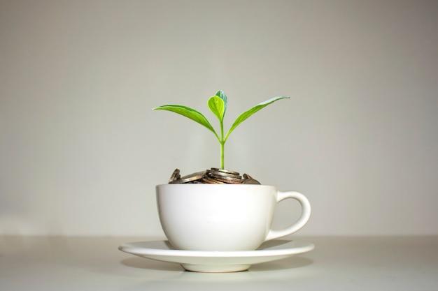 Uma árvore que cresce em uma pilha de moedas em uma xícara de café branco de ideia de crescimento financeiro de xícara de café branco.