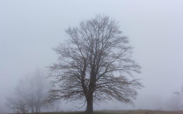 Uma árvore sem folhas no outono no nevoeiro.