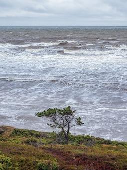 Uma árvore solitária em uma saliência rochosa, um penhasco acima do mar
