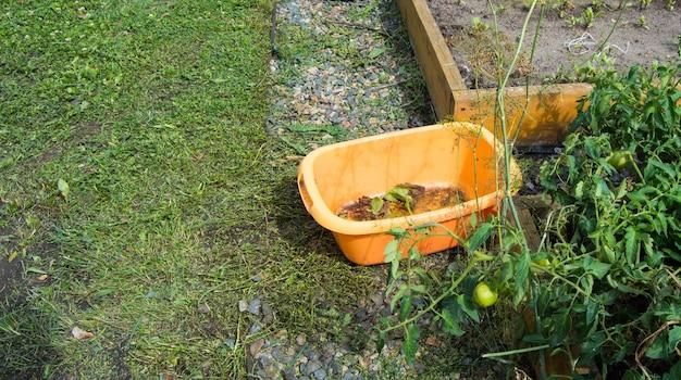 Uma bacia vazia de plástico laranja para coletar ervas daninhas durante a sacha fica na grama verde do jardim, ao ar livre, no verão