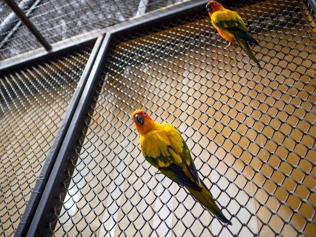 Uma bela arara e papagaio