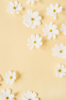 Uma bela camomila branca, flores de margarida em amarelo pálido