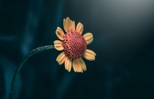 Uma bela e pequena flor silvestre de pétalas amarelas
