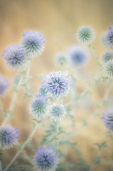 Uma bela flor azul selvagem no campo