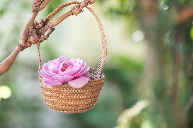 Uma bela flor rosa do damasco cor-de-rosa na cesta de bambu.