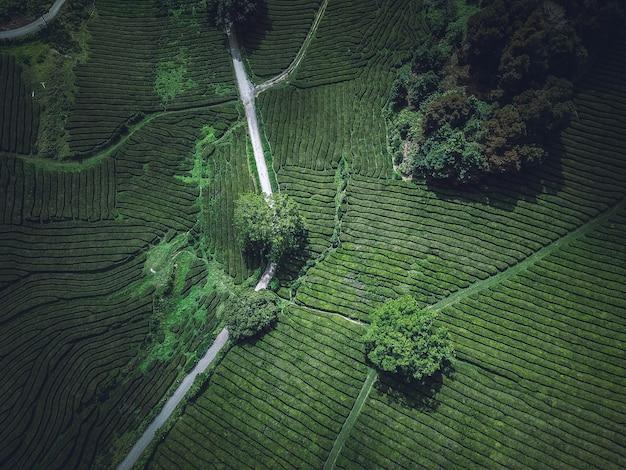 Uma bela foto aérea aérea de um campo agrícola verde