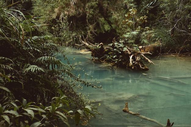 Uma bela foto de um lago cercado por árvores e plantas
