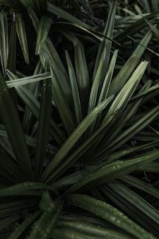 Uma bela planta closeup