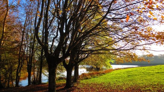 Uma bela vista de um parque com um lago no outono