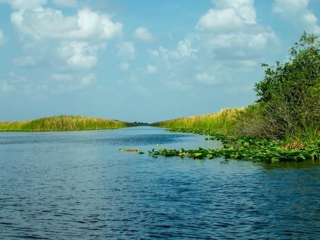Uma bela vista do pântano de everglades no verão.