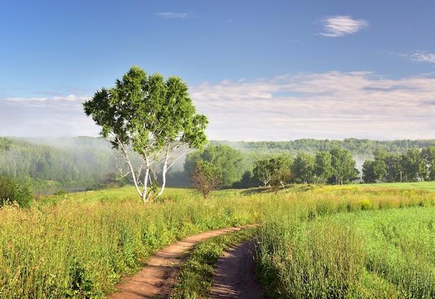 Uma bétula sob um céu azul uma estrada rural em um prado verde neblina no horizonte natureza da sibéria