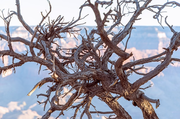 Uma bola de galhos secos de árvore no grand canyon