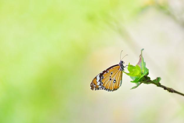 Uma borboleta empoleirada na bela flor