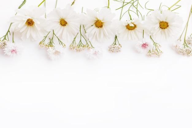 Uma borda de flores brancas cosmea em branco. copie o espaço. conceito de dia do casamento da mãe, dia dos namorados, mulheres.