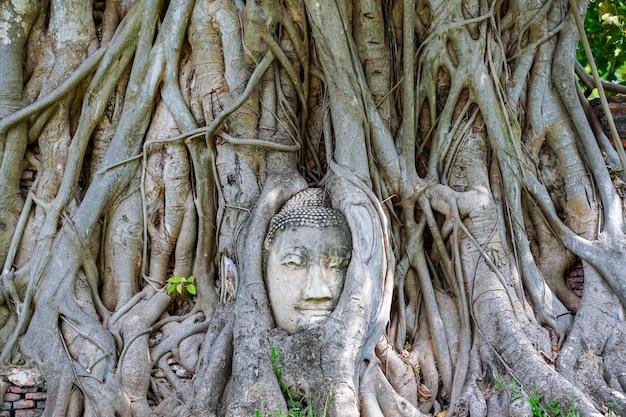 Uma cabeça de pedra da buda nas raizes de uma árvore, tomada em ayutthaya, tailândia.
