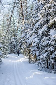 Uma caminhada pela floresta de inverno bela paisagem de inverno