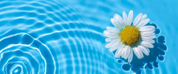 Uma camomila em um fundo de água azul. vista superior, configuração plana. bandeira.