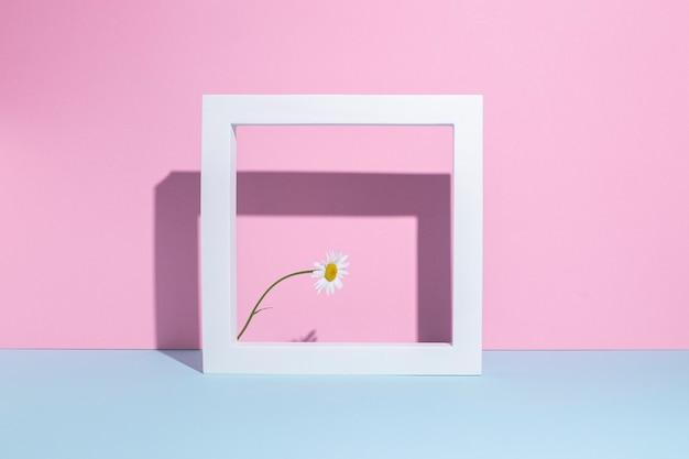 Uma camomila em uma moldura quadrada branca, um pódio de apresentação em um fundo rosa-azulado.