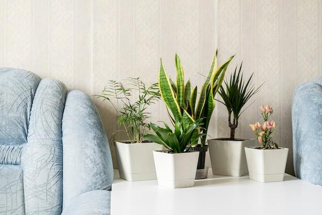 Uma casa de estilo escandinavo com jardim de plantas verdes na prateleira