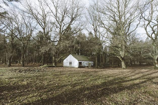 Uma casa na floresta