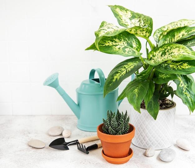 Uma casa planta em vasos de flores e regador verde sobre a mesa