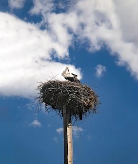Uma cegonha-branca com um bico vermelho e asas pretas em um ninho em um poste