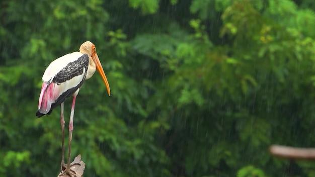 Uma cegonha solitária na chuva