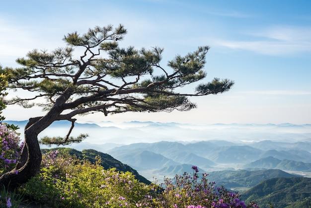 Uma cena de montanha cheia de nuvens e flores