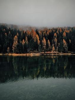 Uma cena vertical de árvores amarelas e verdes perto da água