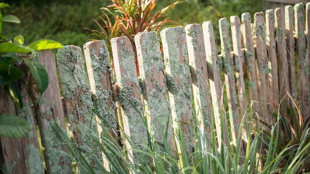 Uma cerca de madeira velha com videiras crescendo em direção a ela; estilo tradicional de cerca em mae hong son, norte da tailândia