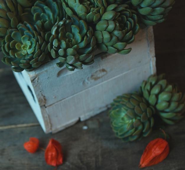 Uma cesta de madeira branca de flores suculentas. imaage