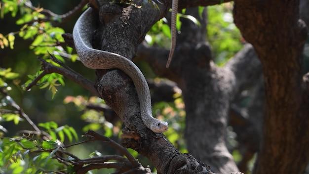 Uma cobra rastejando ao longo de um tronco de árvore