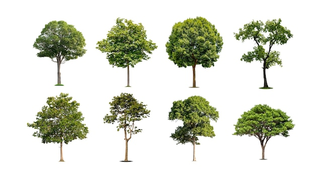 Uma coleção de belas árvores isoladas em um fundo branco, ideais para uso em projetos arquitetônicos, publicações e decoração de sites.