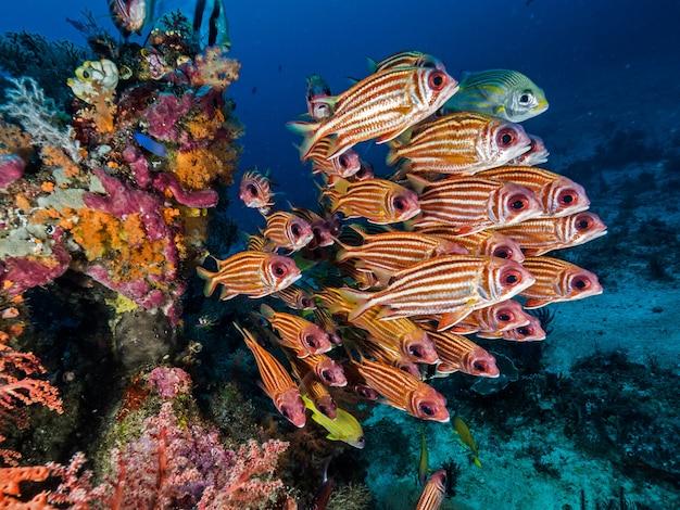 Uma coleção de peixes bonitos