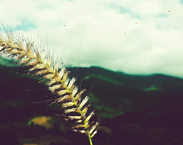 Uma colheita em uma montanha