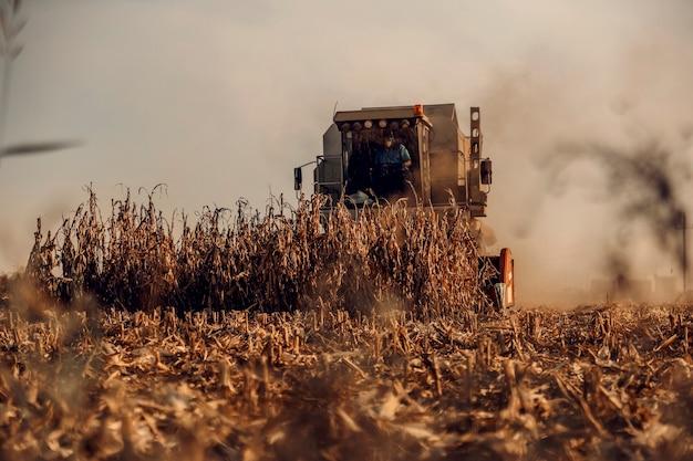 Uma colheitadeira de colheita de milho no outono. uma máquina de corte de talos de milho. época de colheita do milho.