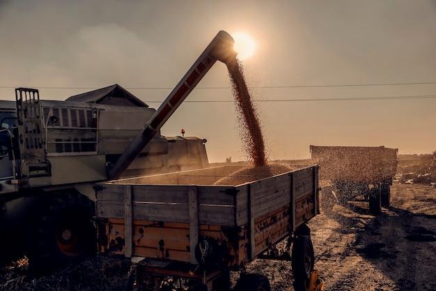 Uma colheitadeira despejando grãos de milho em um trailer após a colheita. uma colheitadeira no campo, colheita de milho