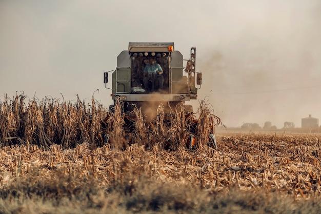 Uma colheitadeira está colhendo milho no campo no outono. a planta de milho dourado foi colhida por máquina. colheita de milho no outono.